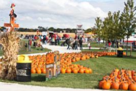 home-pumpkinfest